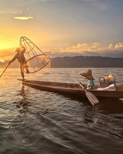 thau birman